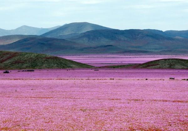 Atacama_LNCIMA20151029_0074_1